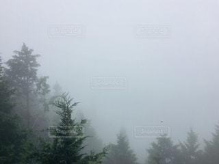 霧と雨。の写真・画像素材[2166471]