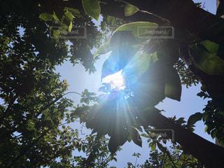 ハート太陽が散歩道を導いてくれます。の写真・画像素材[2212893]