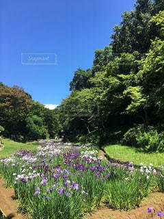 雨上がりのハイキング。菖蒲のきれいな季節。の写真・画像素材[2220860]