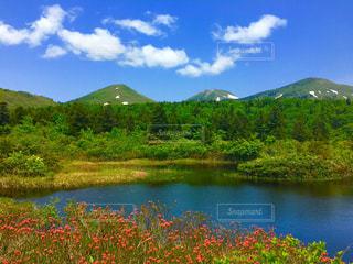 赤い花、山と木々に囲まれた湖。八甲田にての写真・画像素材[2261437]