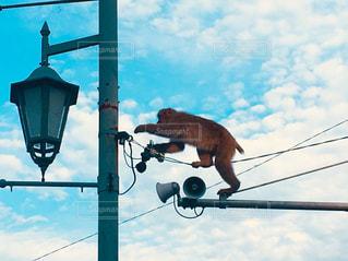 秋の空と野生の猿。の写真・画像素材[2413669]