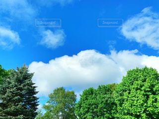 青空に浮かぶふわふわな雲の写真・画像素材[2288566]