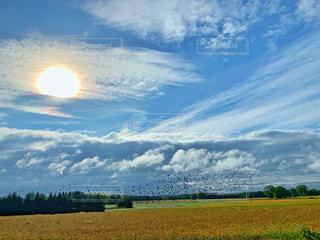 黄金色に輝く麦畑の上を渡り鳥が飛ぶ、秋の風景。の写真・画像素材[2425208]