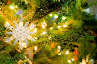 クリスマスのイメージ ツリーの飾りの写真・画像素材[2824869]