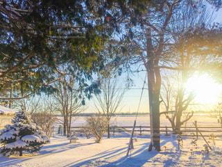 雪に覆われた庭の写真・画像素材[2865878]