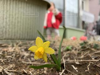 ひっそり咲いたの写真・画像素材[2140603]