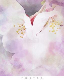 花,春,桜,ピンク,さくら