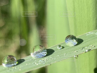 自然,屋外,緑,草