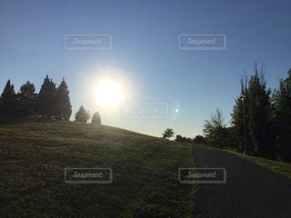 空,公園,木,芝生,屋外,太陽,晴天,散歩,光,丘,みどり,お散歩,おでかけ