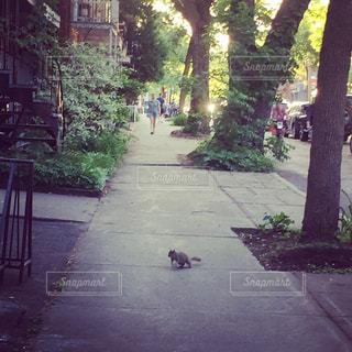 屋外,散歩,道,リス,道端,歩道,街中,お散歩,通り,おでかけ,通り道,りす