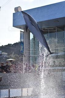 イルカ,水,水滴,水族館,飛ぶ,水玉,雫,しぶき