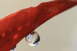 花につく水滴の写真・画像素材[2121568]