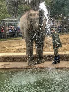 動物,晴れ,水,水滴,水玉,像,雫,噴射,鼻水