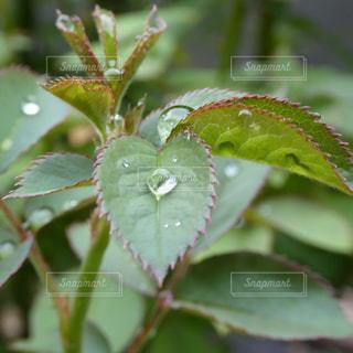 水滴,葉,草木,液滴