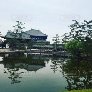屋外,水面,池,景色,東大寺,草木