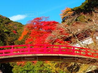 秋の箕面滝道の写真・画像素材[2626060]