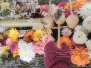 お花に触れないようにの写真・画像素材[3004162]