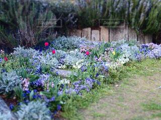 花壇の写真・画像素材[3061457]