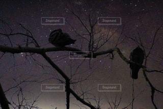 星空の写真・画像素材[3371525]