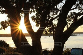 自然,風景,海,空,木,屋外,太陽,朝日,水面,景色,木漏れ日,樹木,癒し,正月,お正月,三重,日の出,光芒,日陰,新年,初日の出,伊勢,伊勢志摩,リフレッシュ,ヒーリング,草木,朝活,スピリチュアル,こもれび,志摩市