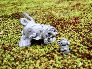 ふわふわの苔にいるお地蔵様と狛犬の写真・画像素材[4274663]