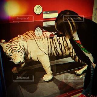 トラと私の写真・画像素材[2145324]