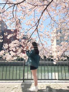 女性,風景,空,花,春,桜,屋外,花見,樹木,さくら,ブロッサム