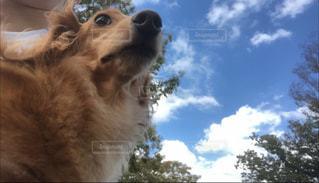 カメラを見ている犬の写真・画像素材[2447949]