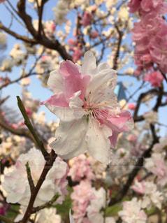 植物の上のピンクの花の写真・画像素材[2127360]