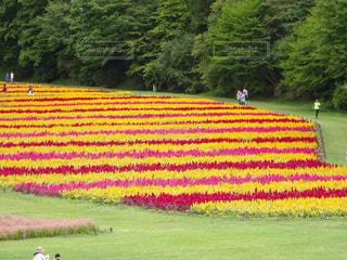 花畑の写真・画像素材[2155890]