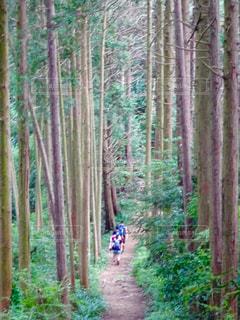 森の木の写真・画像素材[2259324]