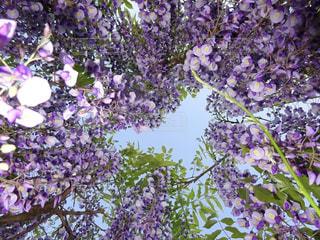 花園のクローズアップの写真・画像素材[2271808]