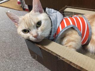 箱の中に座っている猫の写真・画像素材[2312423]
