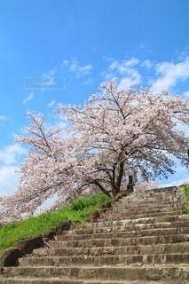 青空と桜の写真・画像素材[3048265]