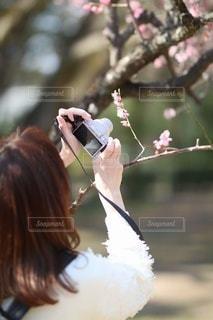 カメラ女子の写真・画像素材[3464228]