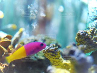 魚の接写の写真・画像素材[2121695]