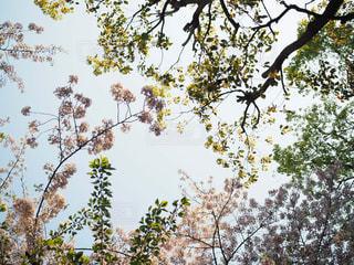 桜の写真・画像素材[2121701]