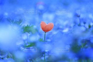 花のクローズアップの写真・画像素材[2121656]