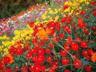 花のクローズアップの写真・画像素材[2121667]