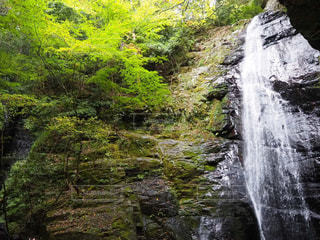 森の中の滝の写真・画像素材[2212389]