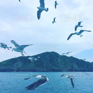 水の体の上を飛んでカモメの群れの写真・画像素材[1317165]