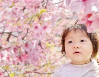 風景,花,桜,ピンク,花見,赤ちゃん,幼児,1歳,河津桜