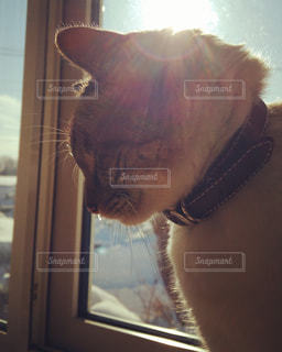 猫,動物,屋内,窓,水滴,日差し,居眠り,ねこ,座る,水玉,雫,後光,陽射し,しずく,滴,うとうと,いねむり,ネコ,スヤスヤ,鼻水