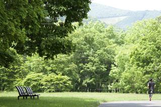 初夏の公園を走るの写真・画像素材[2113947]