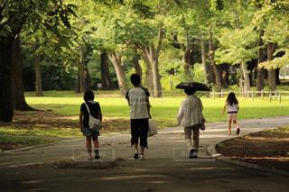 家族,公園,夏,後ろ姿,散歩,木漏れ日,背中,木陰,散策