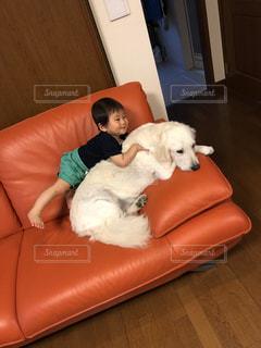 ソファーに横たわっている大きな茶色い犬の写真・画像素材[2111439]