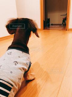 犬,黒,癒し,可愛い,子犬,ダックス,ミニチュアダックス,ワンワン,フォトジェニック,ご主人まち