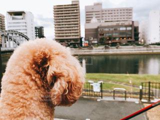 犬,後ろ姿,楽しい,癒し,可愛い,プードル,ミニチュアダックス,お散歩,眺める,フォトジェニック,犬目線