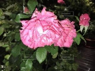 花,水,水滴,雫