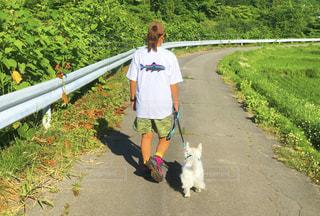 犬,自然,風景,アウトドア,森林,木,芝生,草原,散歩,草,樹木,人物,レジャー,野外,ハイキング,ジャングル,愛犬,ライフスタイル,お出かけ,日中